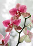 Fototapety Orchideé Orchideen 220710