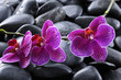 still life with pebble and orchid