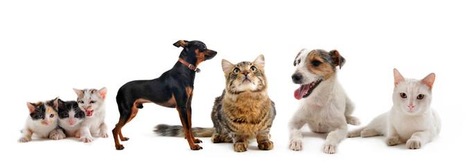 petits chiens et chats