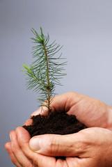Junge Pflanze wächst in der Hand