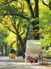 Central Park in early spring - horse carriage