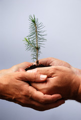 Pflanze gemeinsam in den Händen halten