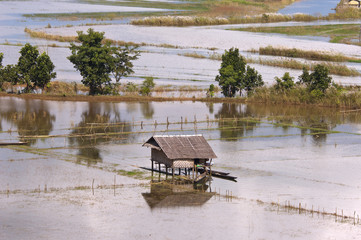 Flooded fields around Inle lake ( during monsoon ) in Burma.