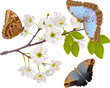 cherry tree branch with three big butterflies