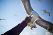 Feeding Seagull / Consept