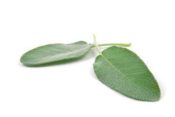 Due foglie di salvia