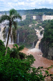 Iguacu waterfalls in Brazil landscape with palm