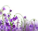 Fototapeta streszczenie - tło - Kwiat
