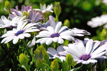 flower #163