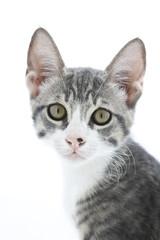 primo piano di gattino