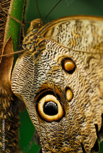 canvas print picture Schmetterling
