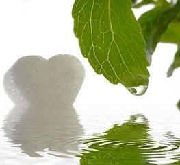 Stevia Rebaudiana mit Zucker und Wasser