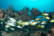 Fish Aggregation, picture taken in Palm Beach County Florida