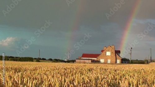 Rainbow and Wheat Field