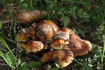 Escargot et chapignon