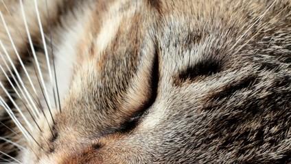 chat dormant en macro