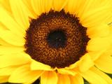 Fototapeta uroda - czarny - Kwiat