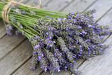 Fototapety Lavender blue close-up