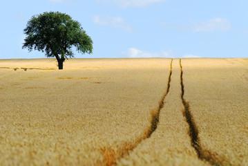 arbre dans les champs
