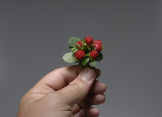 strawberries 22