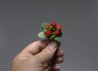 strawberries 22