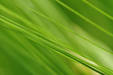 Gerste - Gras