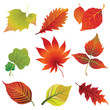 Set 2 of vector colorful autumn leaves. Thanksgiving