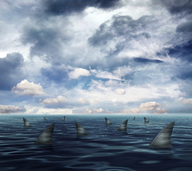 sharks in ocean