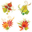set of autumn leafs design elements. Thanksgiving