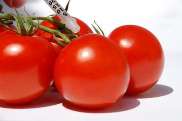 Tomaten und Genmanipulation