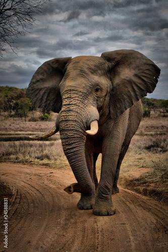 Beastly Elephant