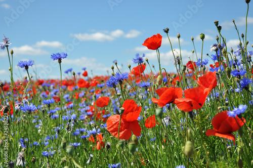 Feldblumen am Wegesrand