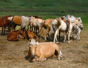 Beautiful horses having rest
