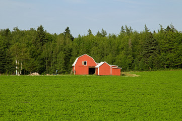 Traditional farm buildings on potato field of PEI