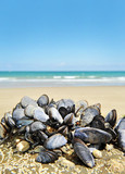 eatable mussels on a rock on sea coast poster
