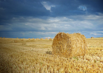 straw after harvest