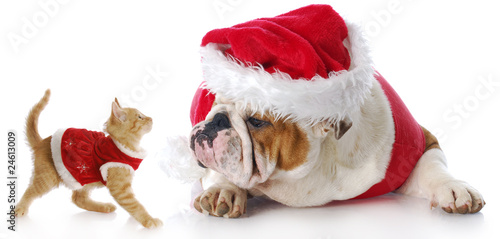 Tuinposter Dragen christmas cat and dog