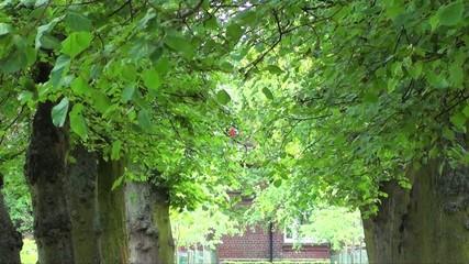 Elegant Branches