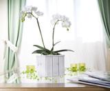 Fototapety orchidée blanche en pot bois blanc devant fenêtre et rideaux