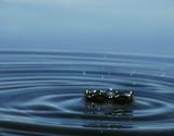 water macro