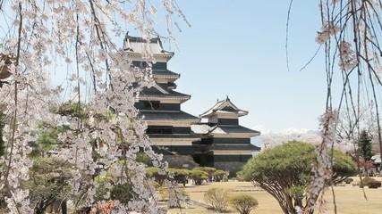 松本城の桜 NO.2
