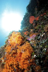 fondale marino mediterraneo