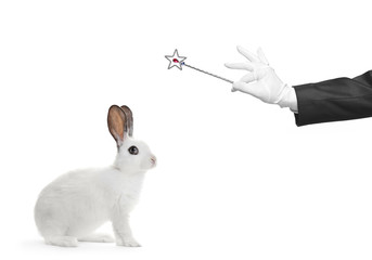A rabbit and hand holding a magic wand isolated on white