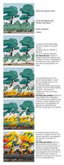 Incendies de forêts - La propagation du feu 2