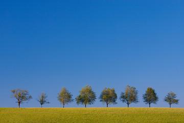 Landschaft im Sommer Schwarzwald © Matthias Buehner