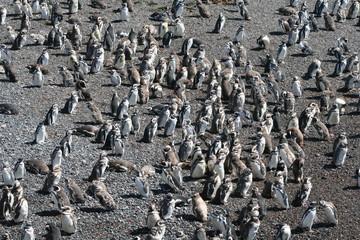 Plage de pingouins