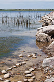 Shoreline of wildlife refuge lake poster