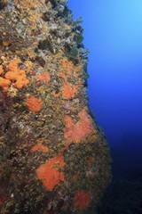 mediterraneo fondale, margherite di mare