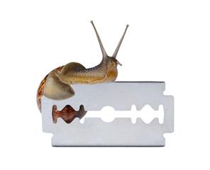 Snail on razor