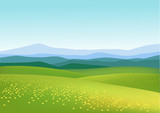 Nature green field background - 24679415